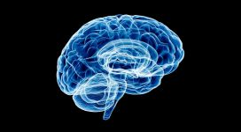 search-for-alzheimer-germ-brain-analizir-feature-image